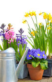 Bright spring flowers — Stock Photo