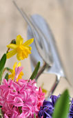 Spring flowers and tools  — Foto Stock