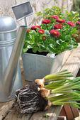 Spring gardening  — Foto Stock