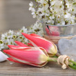 Romantic spring — Stock Photo