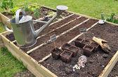 Seedlings in garden square — Stock Photo