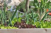 Vegetable garden square — Stock Photo