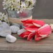 Little red tulips — Stock Photo