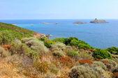 Corsica landscape (Haute-Corse) — Stock Photo