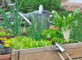Various lettuce and vegetables in vegetable patch — Stock Photo