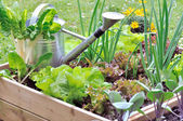 Little vegetable patch — Stock Photo