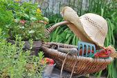 Gardening basket — Stock Photo
