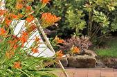 Daylily on terrace — Stock Photo