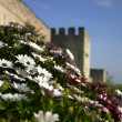 Flowers near Topkapi Palace — Stock Photo