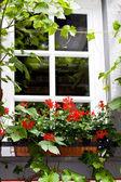 Folhas de uvas de janela — Foto Stock