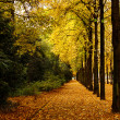 Autumn trees — Stock Photo #20131483
