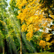 Autumn trees  — Stock Photo #20131487