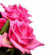 Pink roses — Stock Photo #35844065