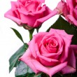 Pink roses — Stock Photo #36720601
