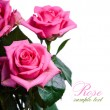 Pink roses — Stock Photo #36720609