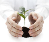 Small plant protected by hands — Stock Photo