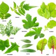 Leaves of  vegetable plants — Stock Photo