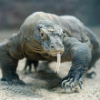 Stock Photo: Komodo dragon