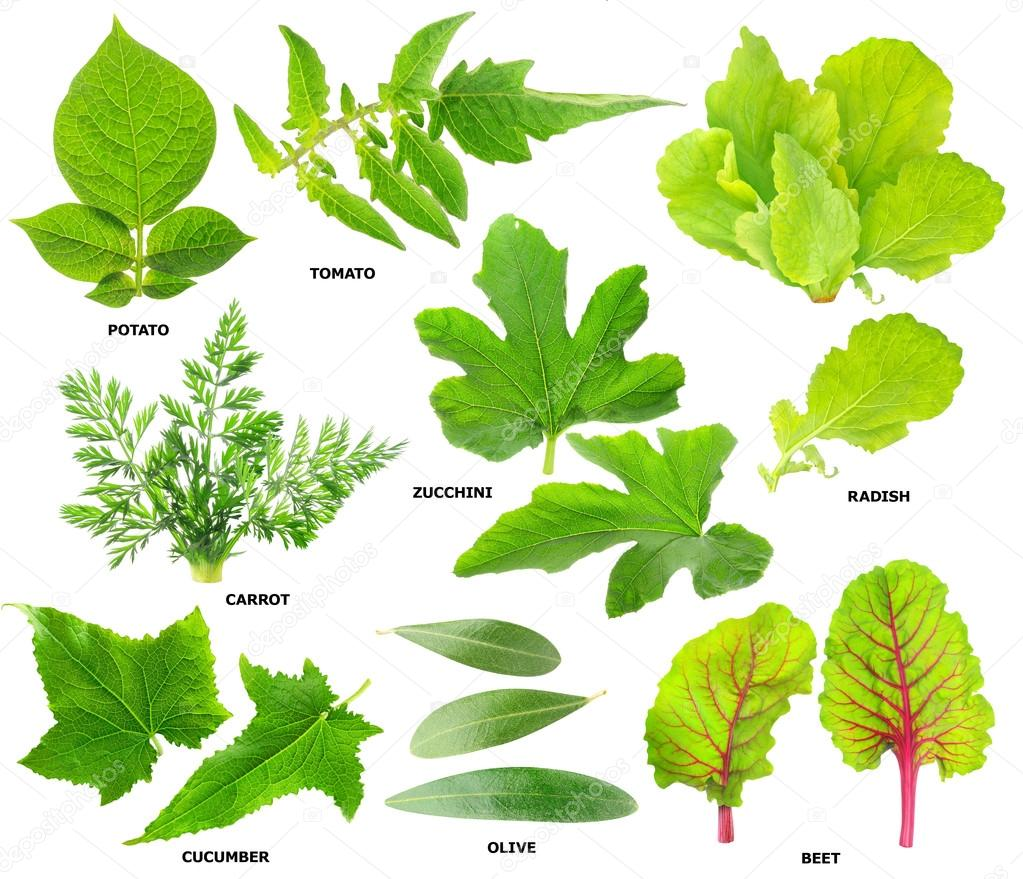 Leaves of vegetable plants stock photo photomaru 14036306 - Flowers not to plant with vegetables ...
