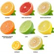 Citrus fruits collection — Stock fotografie