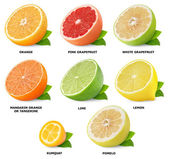 Citrus fruits collection — Photo