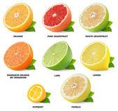 Coleção de frutas cítricas — Foto Stock