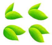 свежие зеленые листья — Стоковое фото
