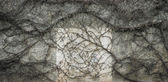 Leafless vine melancholic background — Stock Photo