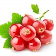 Red currants — Stock Photo #24862799
