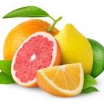 Citrus fruits — Stock Photo #7911395