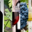 Wine collage — Stock Photo #21376617