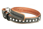 Collar for dogs — Stock Photo
