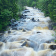 River Flowing Through the Woods — Stock Photo
