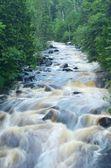 Река в лесу — Стоковое фото