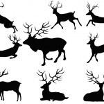 Deer silhouettes — Stock Vector #16212001