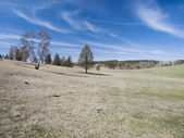 Mongolian steppe with scarce trees — Stock Photo