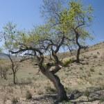 Mongolian desert in spring — Stock Photo #40433313