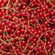 Organic red currant texture — Stock Photo #46368875