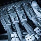Cavi patch e hub di rete — Foto Stock