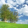 Nice clump of trees, fresh background landscape — Stock Photo
