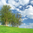 Nice clump of trees, fresh background landscape — Stock Photo #18648319