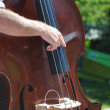 Man playing double bass — Stock Photo