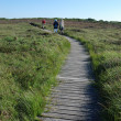 Wooden path in the moor — Stock Photo