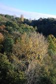 Tree in autumn colours — Stock Photo
