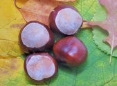 Leaves with chestnuts — Stock Photo