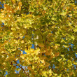 Tree in autumn colours — Foto Stock #35749445