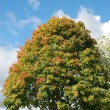 Tree in autumn colours — Stock fotografie #37859349