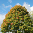 Stock Photo: Tree in autumn colours
