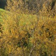 Tree in autumn colours — Stockfoto #38165129
