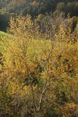 Drzewo jesień kolory — Zdjęcie stockowe